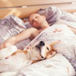 Perro duerme humano ronca